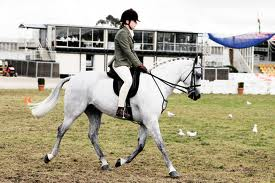 SummitClimb Link Exchange-Horse Riding