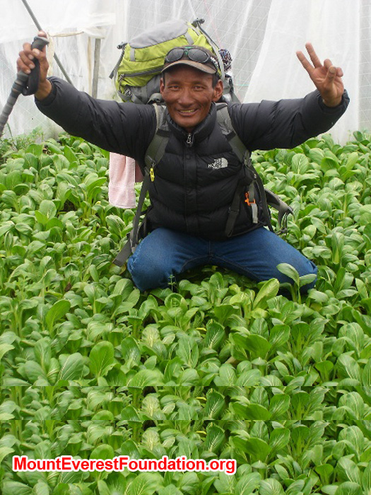 Jangbu Sherpa from the Mount Everest Foundation at the Deboche Convent, in a greenhouse filled with spinach. Thanks to Marcia Macdonald and friends for making this happen. Photo by Lakpa Gyelu