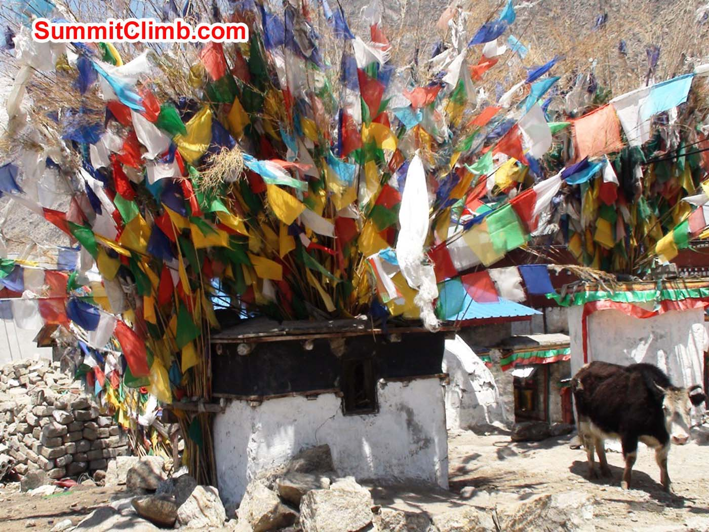 Chorten with prayer flags and a milk cow in Nyalam, Tibet. Angel Armesto photo