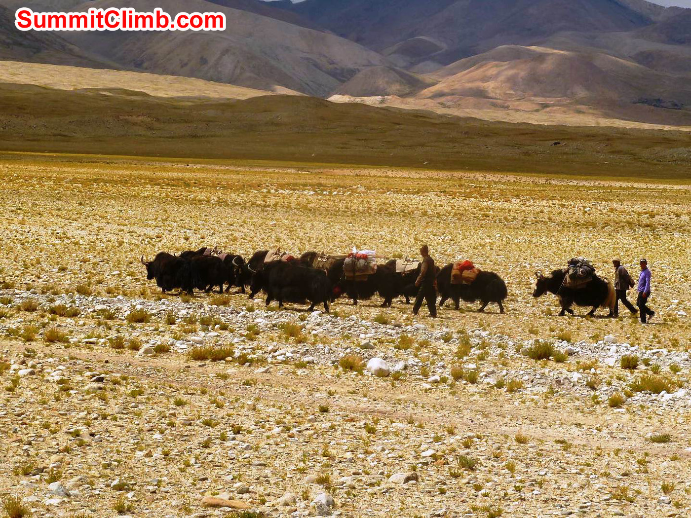 Yak Caravan on the way to Base Camp - Photo by Marina Cortes