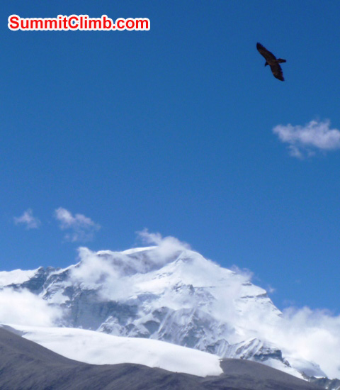 Eagle above Cho Oyu photo by matt olsen