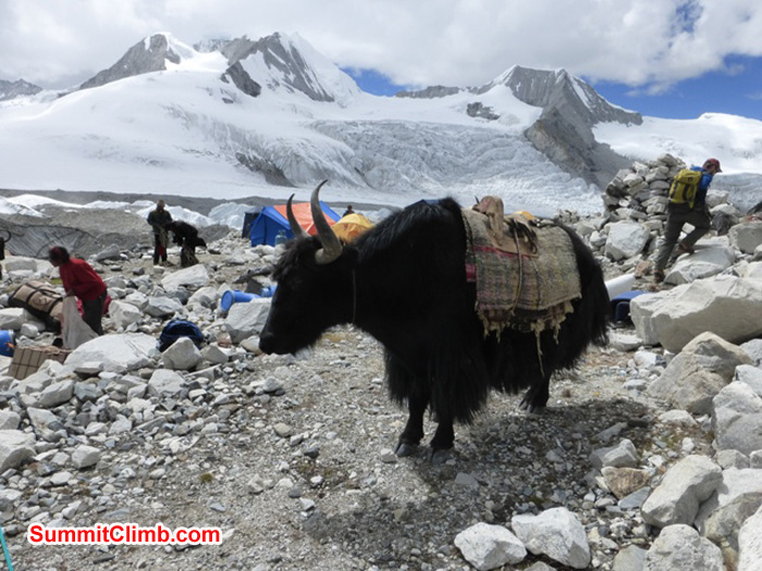 A just unloaded yak in abc with lots of abc setting up activity going on all around. Juergen Landmann Photo