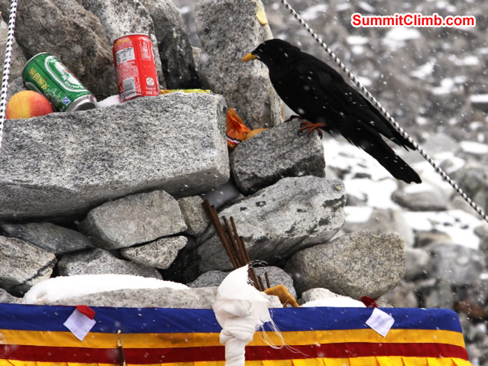 Chuff - Raven enjoys a bit of snack at the Puja ceremony. Matti Sunell Photo
