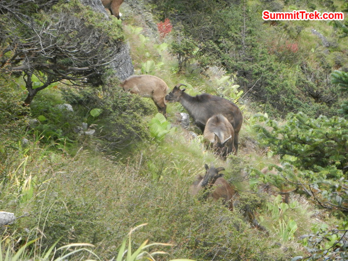Animal seen in Namche hill. Photo by Stephanie