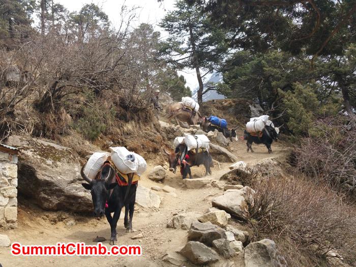 Island Peak, Everest Glacier School and Everest Base Camp News