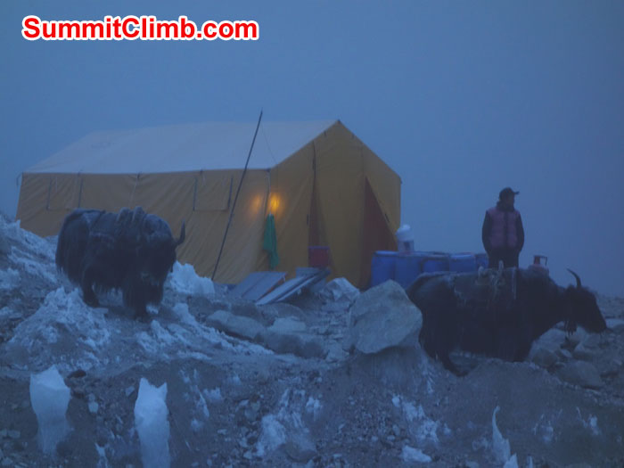 A Yak caravan arrives in our Everest Base Camp at 5am. David Maidment photo