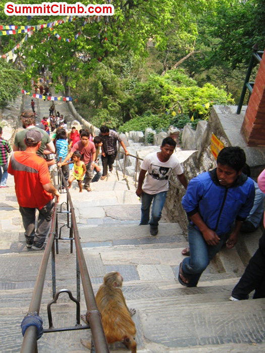 Locals, monkeys and tourists enjoy the steep climb up the steps at the monkey temple. Scott Smith Photo.
