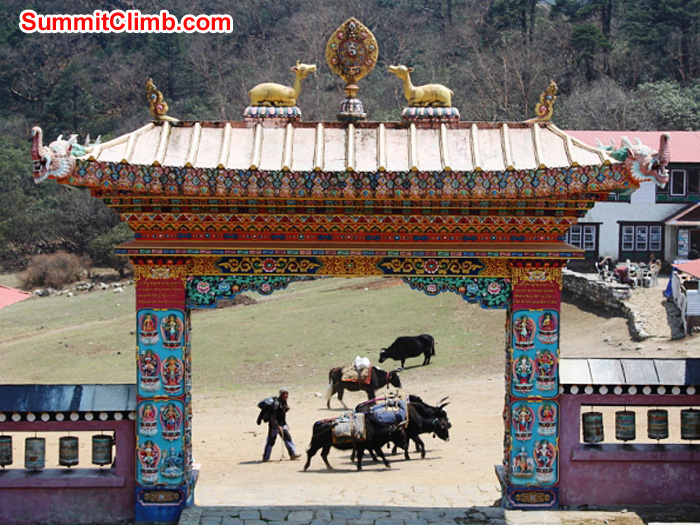 Yak train passes in front of the main gate at Tengboche Gompa. Monika Witkowska Photo.