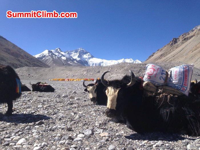 everest tibet, yaks, views view