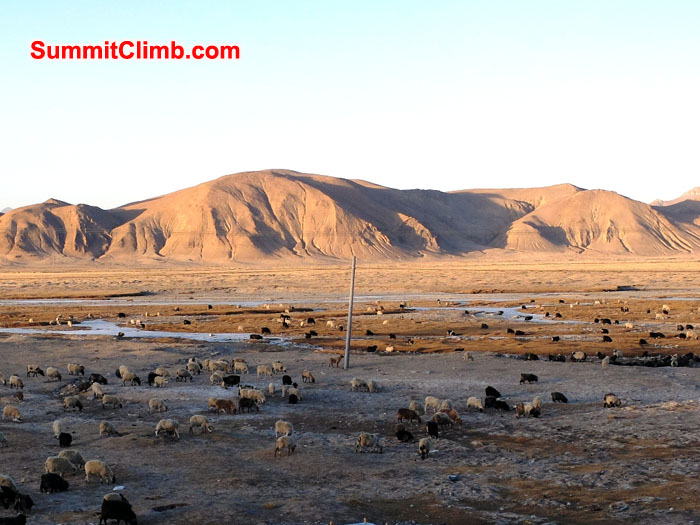 walk behind the one main street of Tingri to see the Tibetan plateau dotted with sheep.