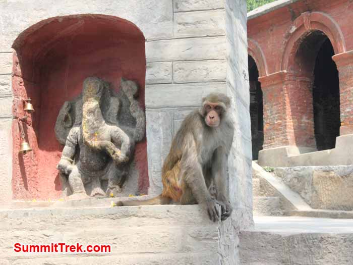 Monkey at Monkey temple. Photo Deha Shrestha