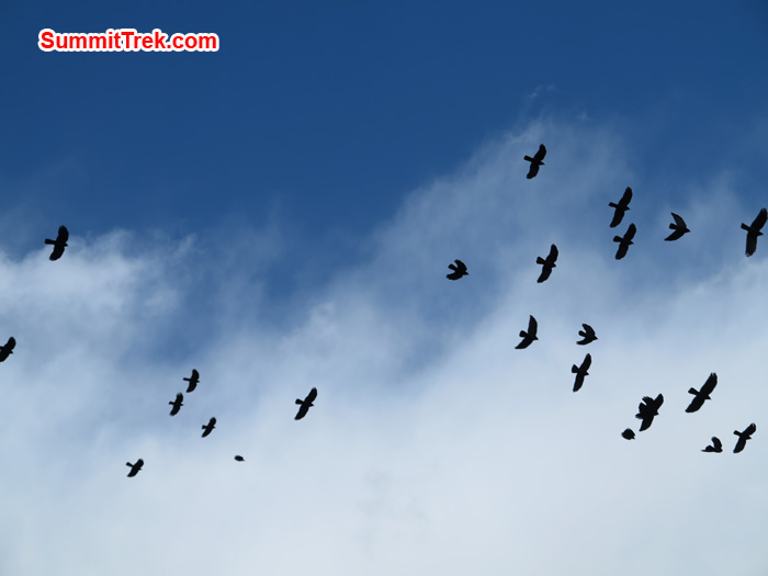 Birds flying over in high. Photo by Matthew Slater