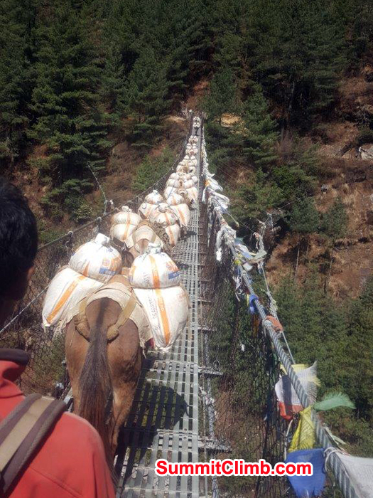 one of the many suspension bridge  and lots of donkey with loads