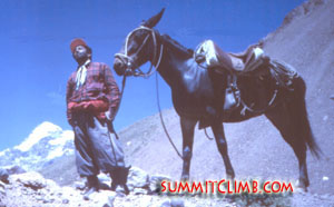 Mule driver on the way to basecamp