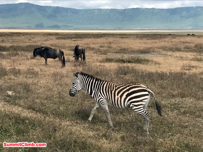 Zebra and other wide animal seen during africa tour