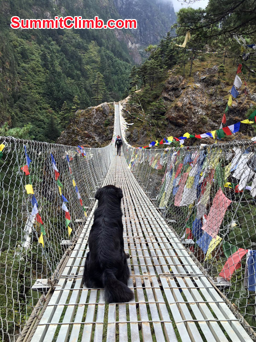 dog in the bridge
