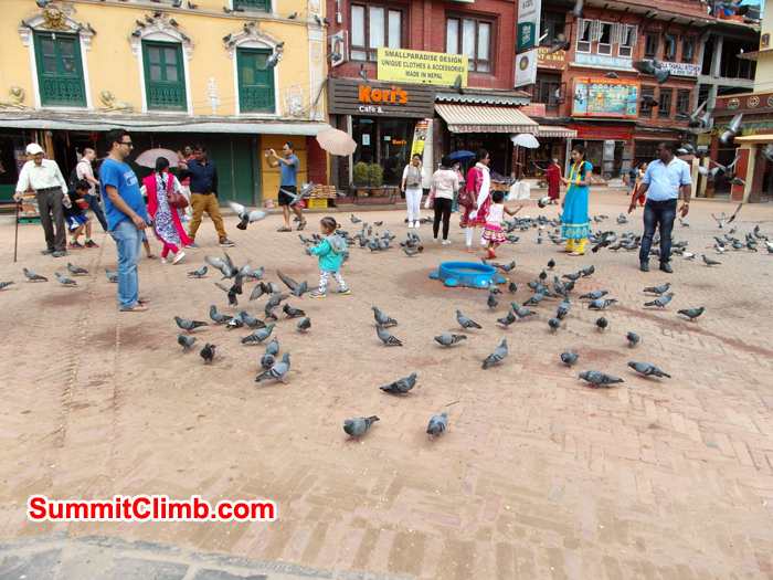 Feeding the Pigeon