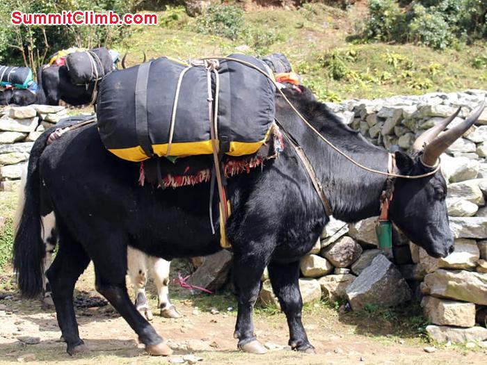 donkey with bag