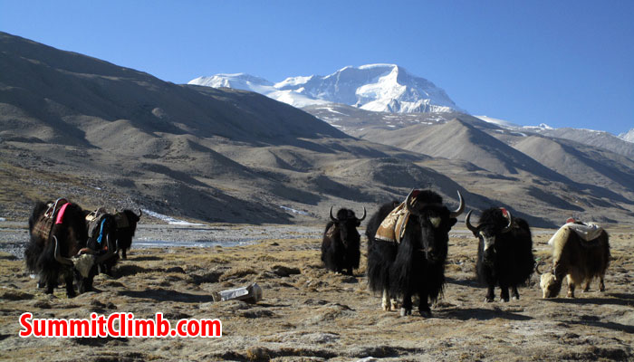 cho oyu news at abc