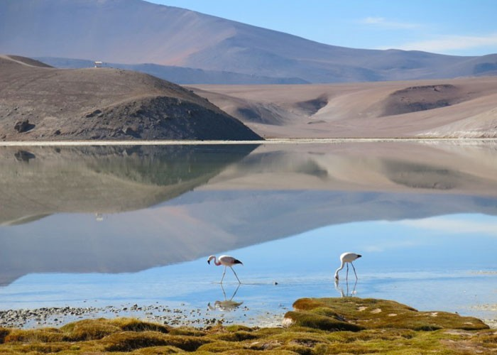 Flamingos na Laguna