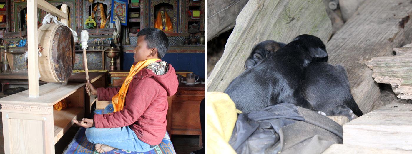Praying at monasty Puppies